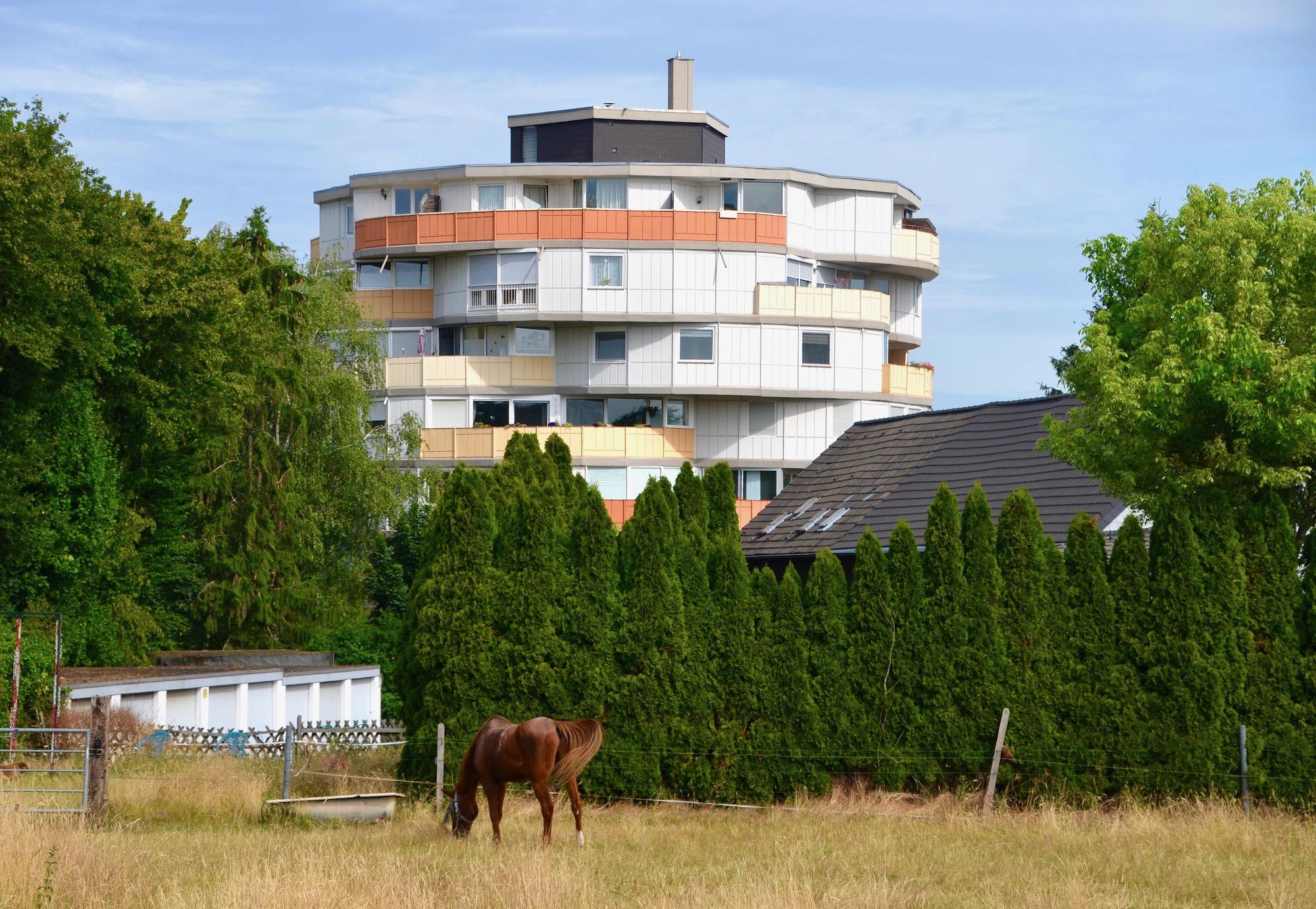 Pferd grast im Vordergrund, ungewöhnlich geformtes Gebäude im Hintergrund