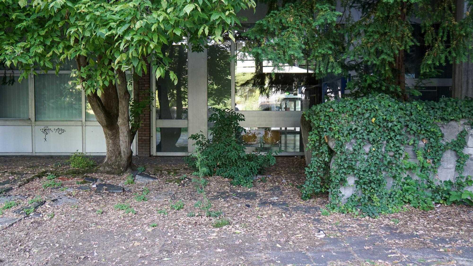 Ungepflegte Gebäudeecke außen: Wurzeln eines Baums heben Platten an, Laub und Müll liegen herum.