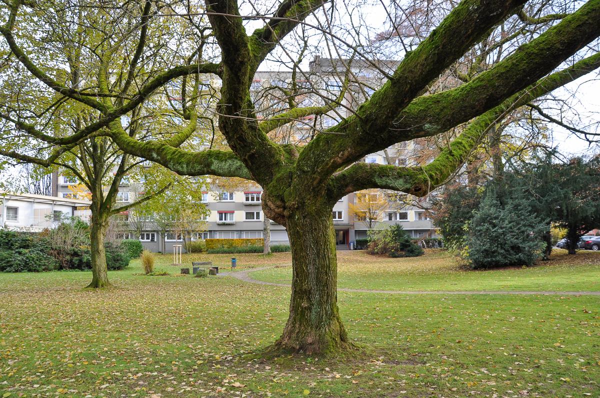alter moosiger Baum vor einem Wohnblock